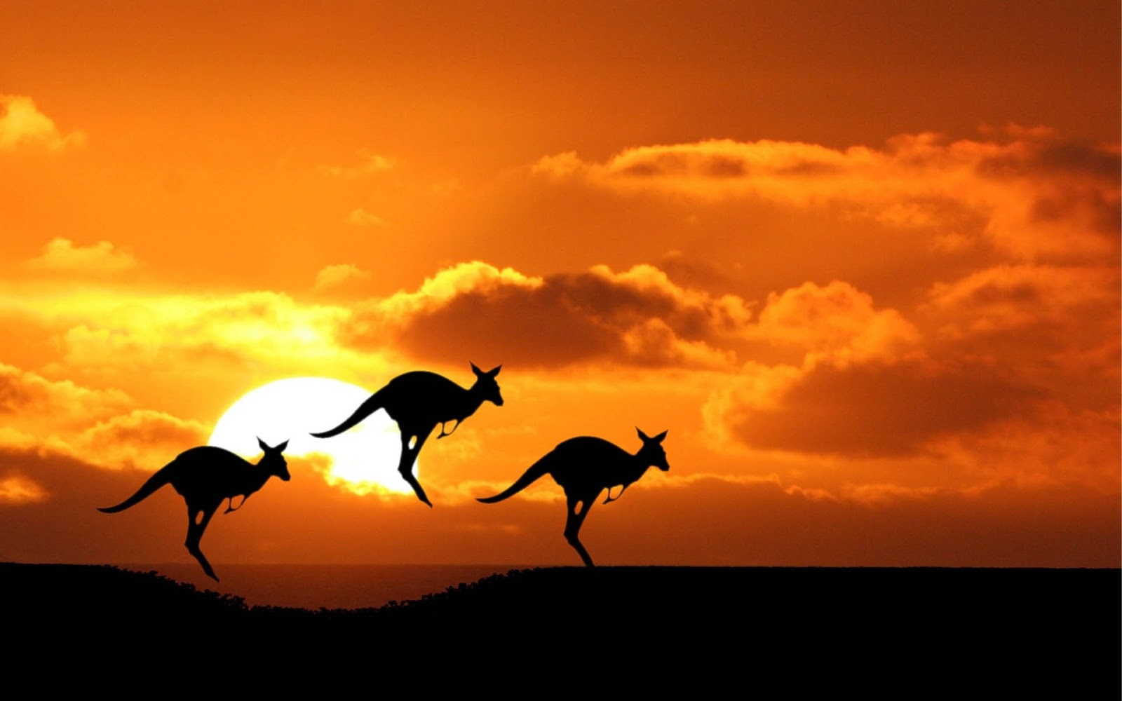 图片搜索结果澳洲