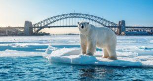 Arctic Voices Polar Bear 1020x500.jpg