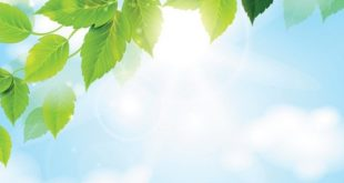 Z:\594-20180512\Final\B Section\B17\sunny-sky-with-green-leaves-background-free-28695.jpg