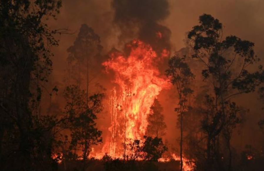 新州、昆州森林大火。