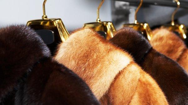 """提倡禁止毛皮买卖的善待动物组织(PETA)举杯庆祝女王的决定,并表示""""这项新决定很跟得上时代脚步,因为如今95%英国大众已经不再穿真皮草""""。"""