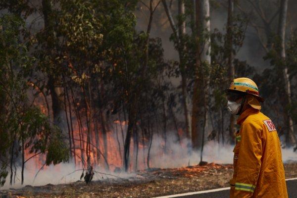 澳洲大火很多是鸟放的火