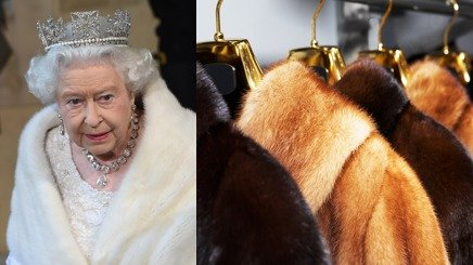 英国女王伊丽莎白二世加入拒穿真皮草的行列,白金汉宫今天证实,未来女王任何新衣只要有皮草都是假皮草。