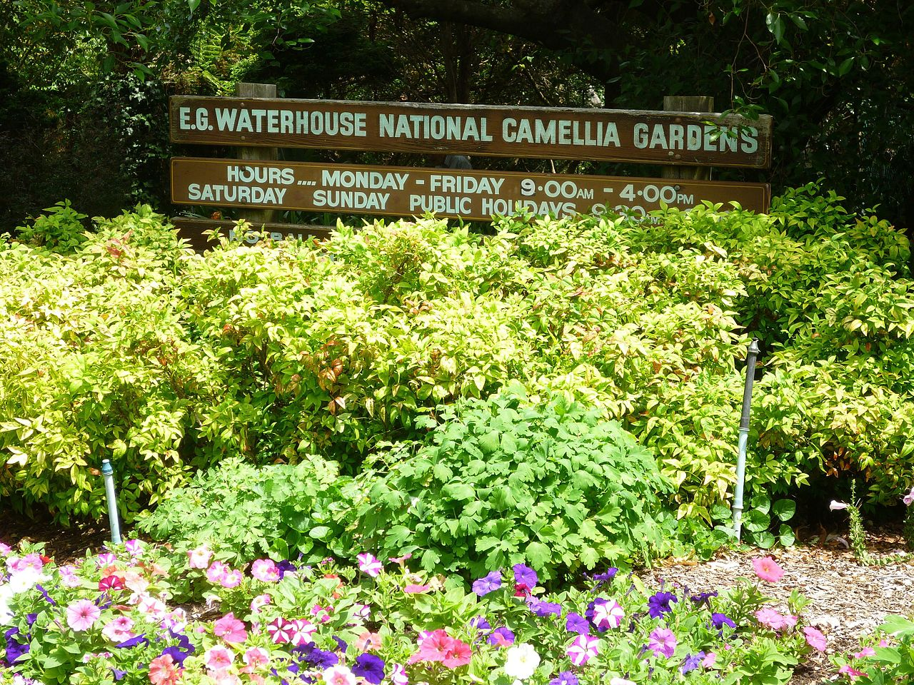 E. G.Waterhouse National Camellia Garden