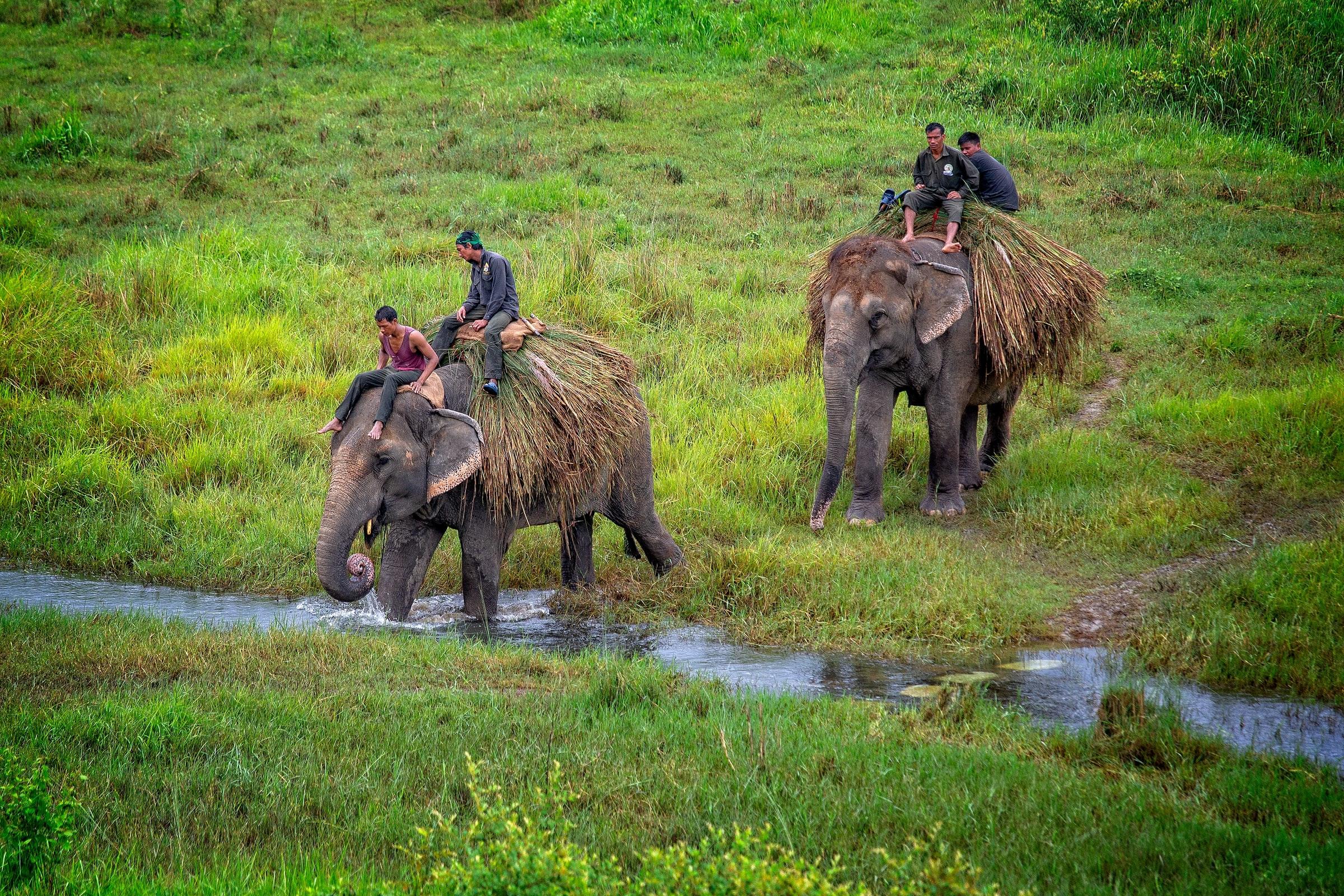 奇特旺国家公园