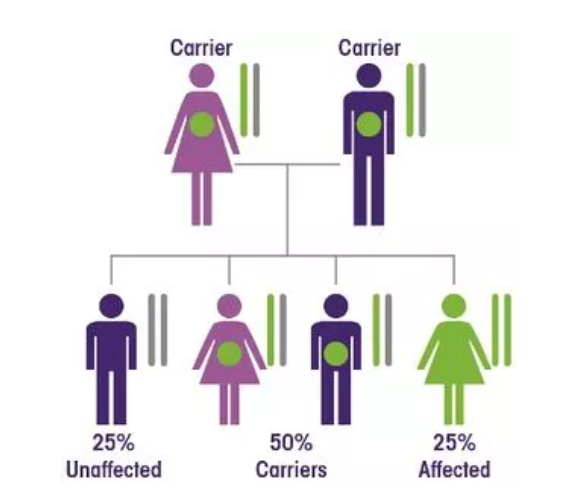 隐性遗传疾病