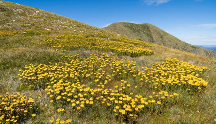 羽毛頂山(Mount Feathertop)位於高山國家公園內