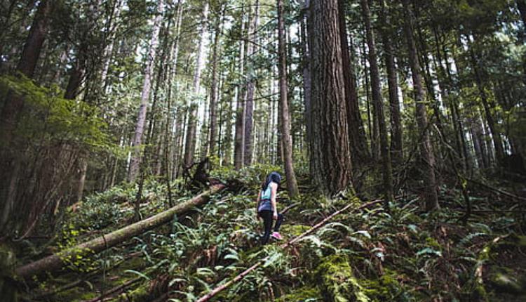 徒步旅行(圖片來源:Piqsels,與本文內容無關)
