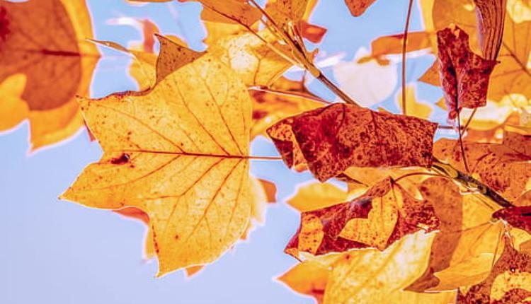 秋天示意圖 (圖片來源:Piqsels)