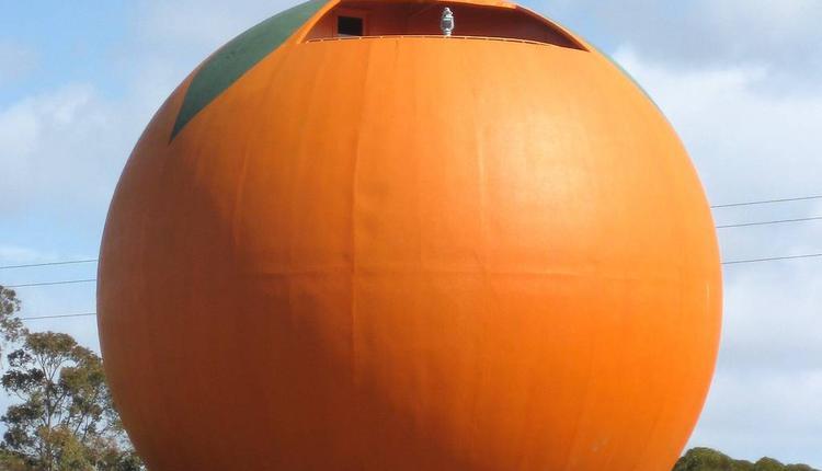 大橘子 圖片來源:timeout