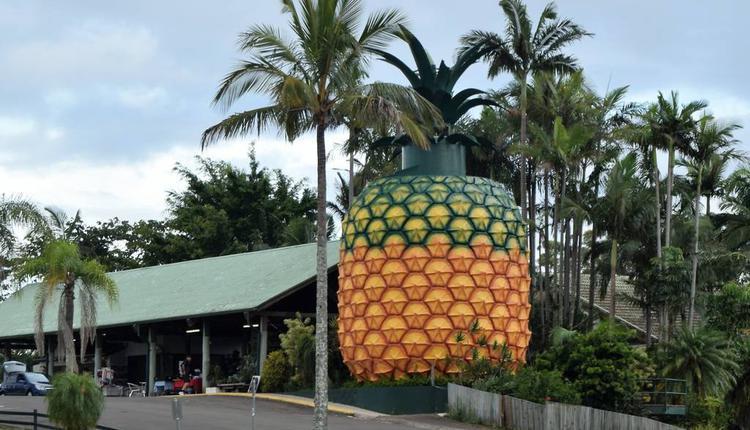 大菠蘿 圖片來源:timeout