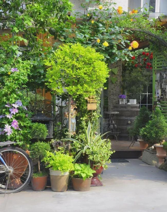 陈莹莹的花园