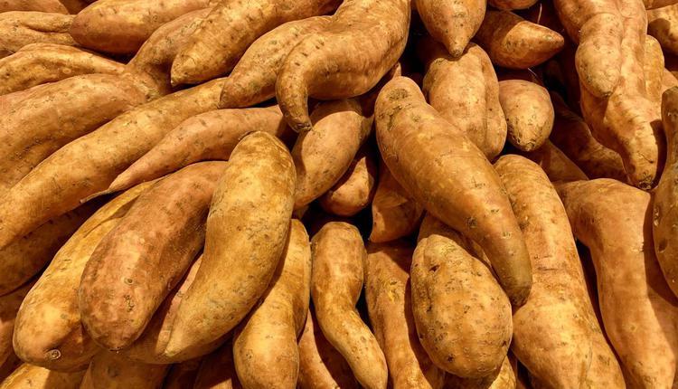 土豆 红薯 sweet potato