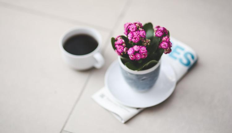 长寿 养生 花